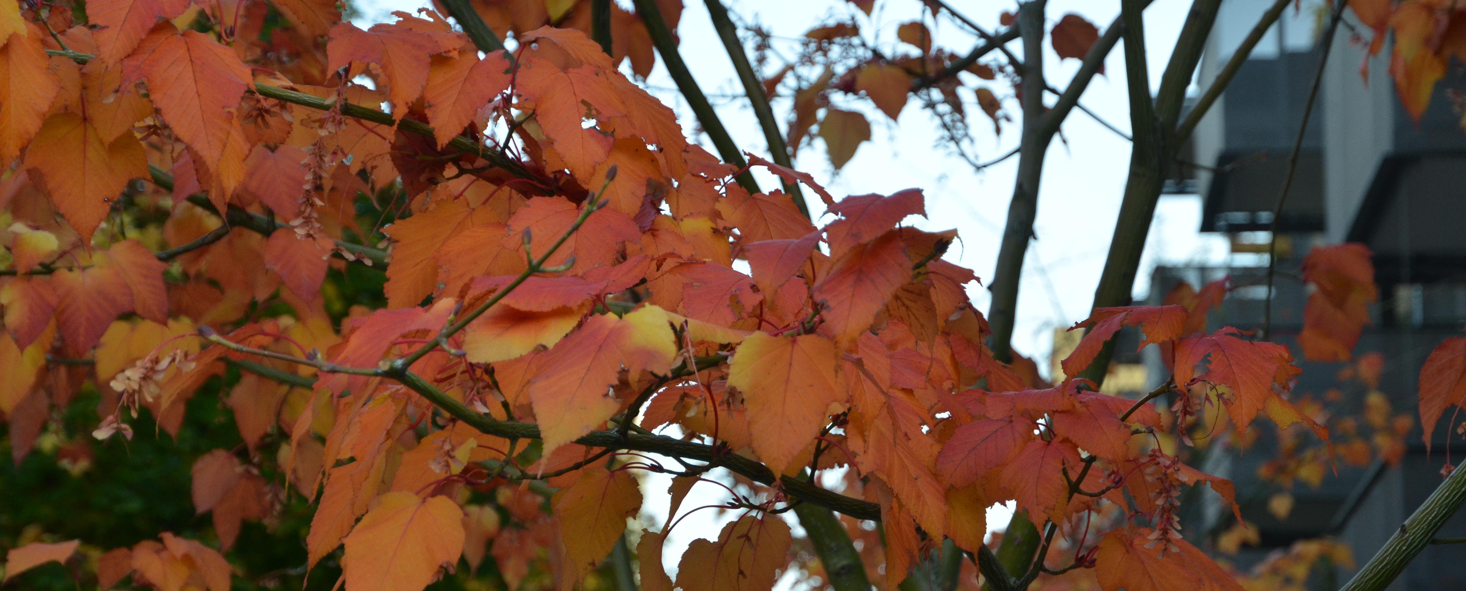 Herbstapero-2016-039_v1